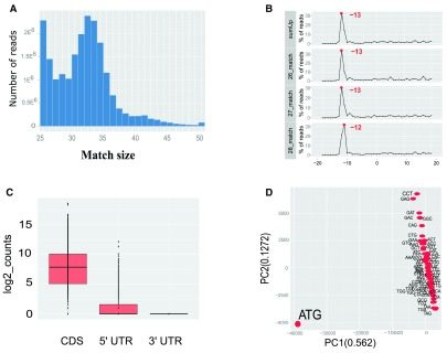 RiboProfiling – a Bioconductor package for standard Ribo-seq pipeline processing
