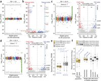 Analysis of allelic expression patterns in clonal somatic cells by single-cell RNA-seq