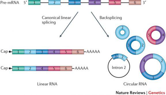 Detecting circular RNAs from RNA-Seq data