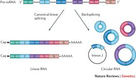 Detecting circular RNAs from RNA-Seq data