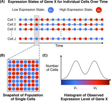 A statistical approach for identifying differential distributions in single-cell RNA-seq experiments