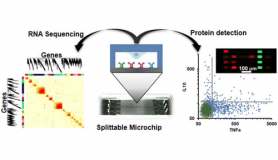 Split microchip for single cell transcriptome and proteome analysis