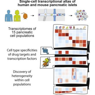 A Single-Cell Transcriptomic Map of the Human and Mouse Pancreas