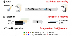 CoverageAnalyzer (CAn) – A Tool for Inspection of Modification Signatures in RNA Sequencing Profiles