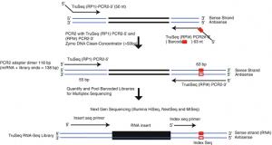 Complete Transcriptome RNA-Seq