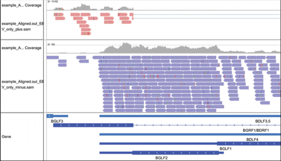 Analysis of EBV Transcription Using High-Throughput RNA Sequencing