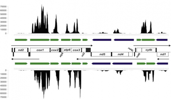 For model species, the 3′ RNA-seq method might more accurately detect differential expression