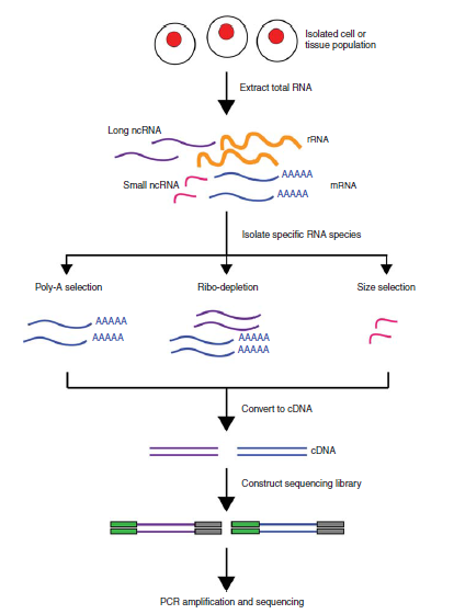 an introduction to the analysis of the structure of dna The mathematics of dna structure, mechanics, and dynamics  introduction the discovery of dna structure 55 years ago  the analysis of dna.