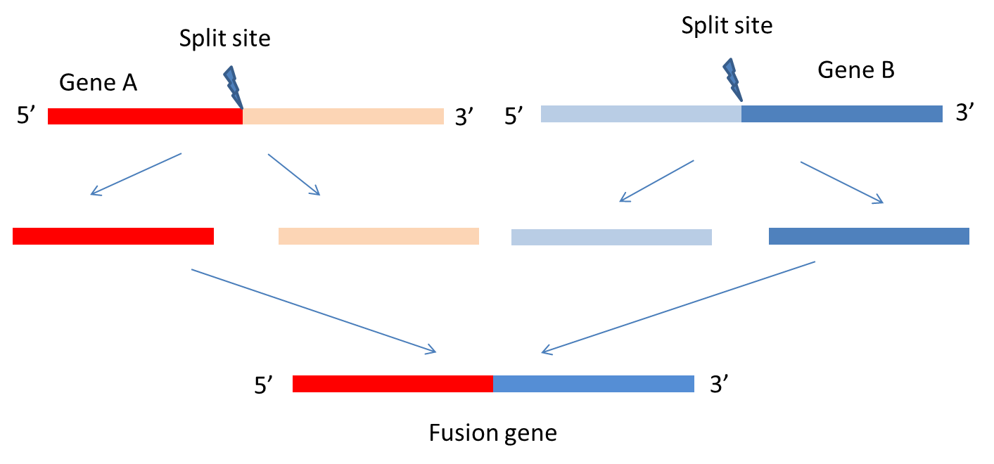 Fusioncancer A Database Of Cancer Fusion Genes Derived