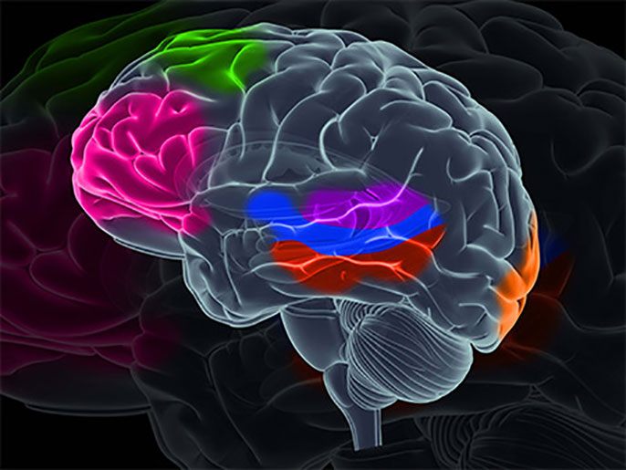 Single Cell Rna Sequencing Reveals Human Brain Houses