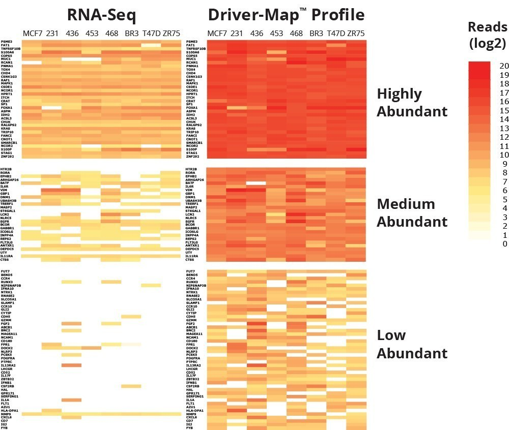 Cellecta, Inc. Driver-Map (TM) Expression Profiling service achieves 1,000 to 10,000-fold dynamic range resulting in greater sensitivity than RNA-Seq to yield a more comprehensive view of low- and high-abundant gene transcripts across panels of interest (PRNewsFoto/Cellecta, Inc.)
