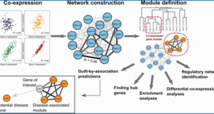 network analysis definition