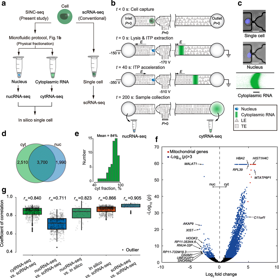 Single Cell Rna Sequencing Scrna Seq Of Cells