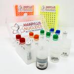 Amaryllis-RNA-seq.w1500px-0.png