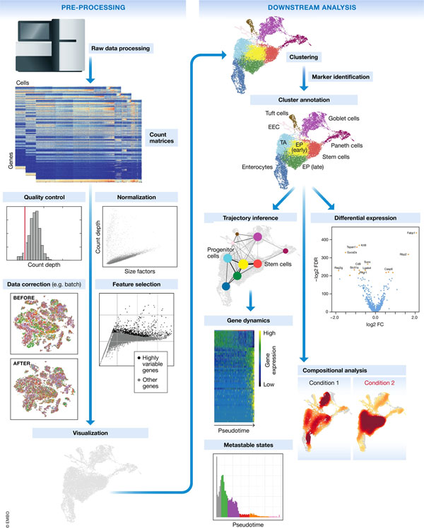 Tutorial – current best practices in single‐cell RNA‐seq
