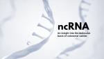 Novogene-ncRNA-Cancer.png