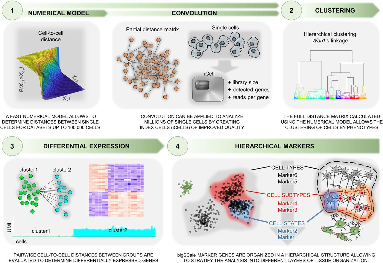 Long Term And Short Term Effects Of Rna Fixation On Single Cell Rna Sequencing Rna Seq Blog Aligning rna seq reads to reference