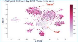 Singleron RNA-Seq