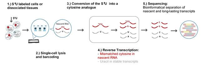 Singleron - RNA-Seq